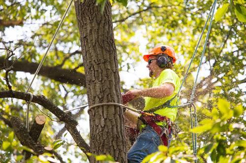 TreeCareHQ Winchester providing arborist tree services
